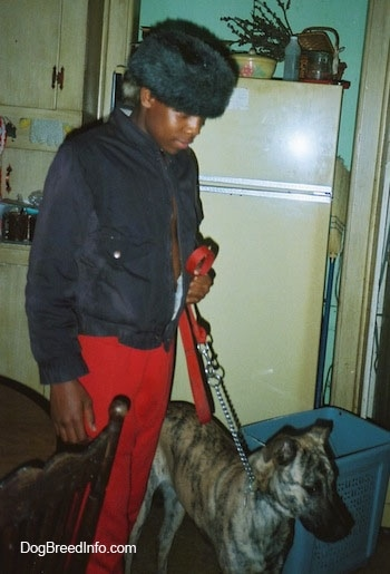 A person in red pants is standing next to and holding the leash of a brindle Staffy Bull Pit dog that is looking to the right in a kitchen. There is a yellow refrigerator next to them. The guy holding the dog has a fur hat on.