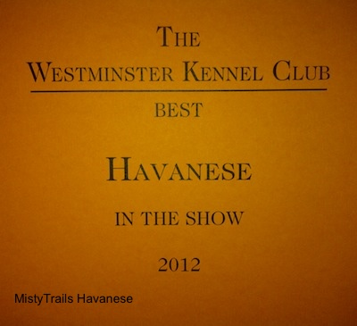 A picture of, The Westminster Kennel Club Best Havanese in the show 2012, Award