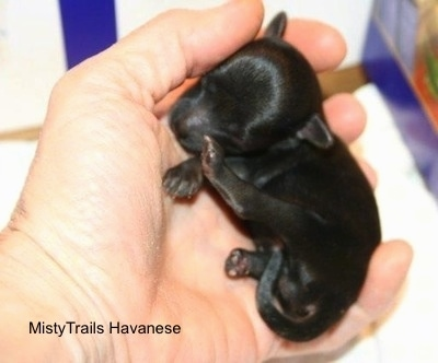 Close Up - Puppy curled up in the hands of a person