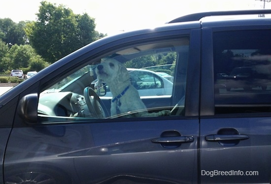 A dog is sitting on the driver side of a vehicle. It is sticking its nose out of a crack in the window