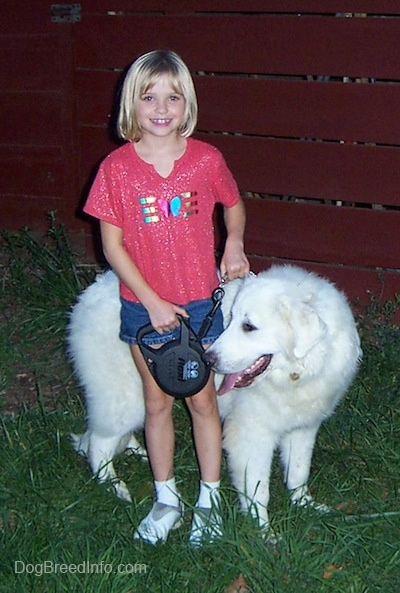 Tundra the Great Pyrenees standing on grass behind a girl who is smiling for the picture