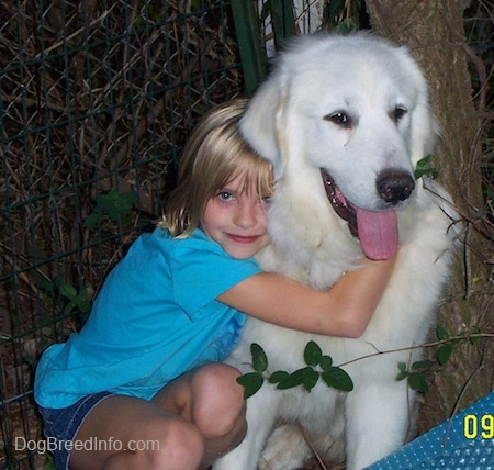 A white Great Pyrenees is sitting in front of a tree and it is getting a hug from a girl. The dog's mouth is open and tongue is sticking out.