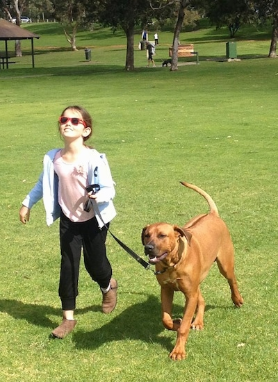 A girl in red sunglasses is leading a Rhodesian Ridgeback on a walk across a park field. The dog has a line down its back.