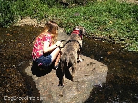 The back of a blue-nose brindle Pit Bull Terrier and a girl are standing on a big rock in the middle of water