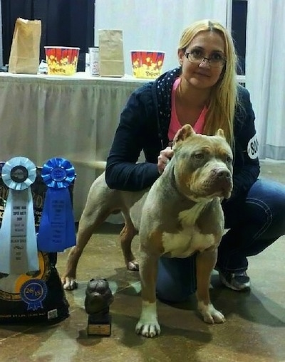 The front right side of a gray with white American Bully that is standing next to its owner and ribbons.