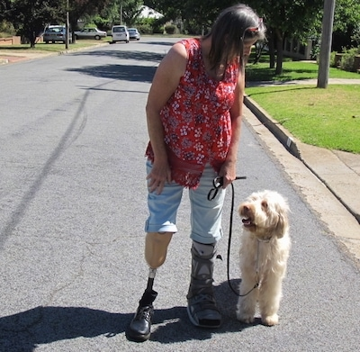 A white Australian Cobberdog is assisting an ampuitee with a broken foot. They are standing in a street and looking at each other.