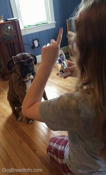 Sara taking a picture of Bruno the Boxer who is wearing a pair of glasses