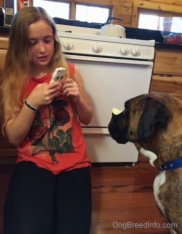 Sara taking a picture of Bruno the Boxer with a potato chip on his snout