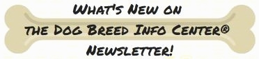 A drawn bone with the words - What's New Newsletter and The Dog Breed Info Center(R) - inside of the bone