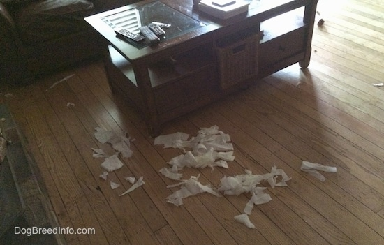 Chewed up tissue pieces on a hardwood floor around a coffee table.