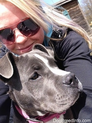 Close up - A blonde haired girl is wrapping her arms around the shoulders of a blue nose American Bully Pit puppy. She is looking down and to the right.