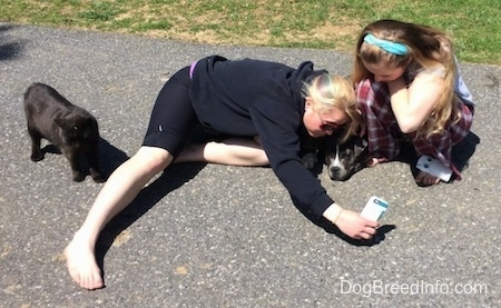 A blonde haired girl is laying out on a blacktop surface and taking a picture of her and a blue nose American bully Pit puppy that is laying down. A girl with a blue ribbon in her hair is kneeling next to the puppy. A black cat is standing behind the blonde haired girls leg.