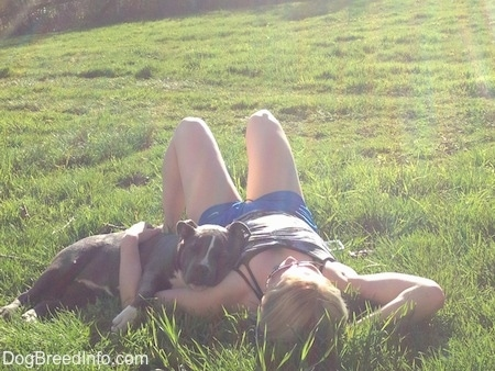 A blonde haired girl is laying in a field and a blue nose American Bully Pit puppy is laying over top of her arm.