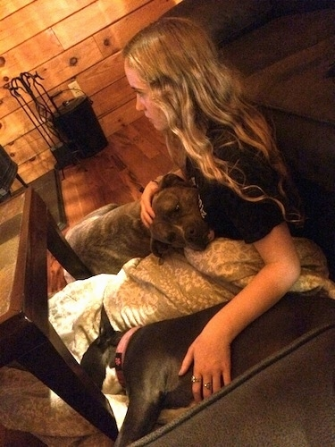 A blonde haired girl is sitting in front of a couch and she is wrapped in a blanket. Next to her is a blue nose American Bully Pit puppy and on her other side is a blue nose Pit Bull Terrier. They are sitting on a hardwood floor in a log cabin.