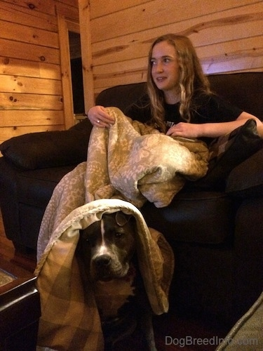 A blonde haired girl is sitting in a chair and she is covered in a blanket. Sitting under the blanket on the floor is a blue nose American Bully Pit puppy. They are inside of a log cabin.
