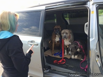 A girl with colorful hair is standing in front of an open van door with a finger up. There are three dogs sitting in the middle section of the mini van. They are waiting for the command to leave the van.