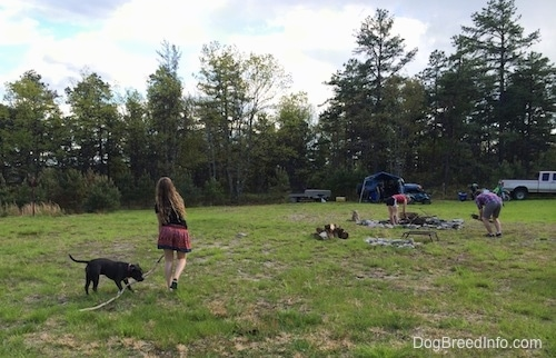 A girl in a black shirt is pulling a large stick next to her and a blue nose American Bully Pit is biting the stick. In the background two people are out getting sticks for a fire.