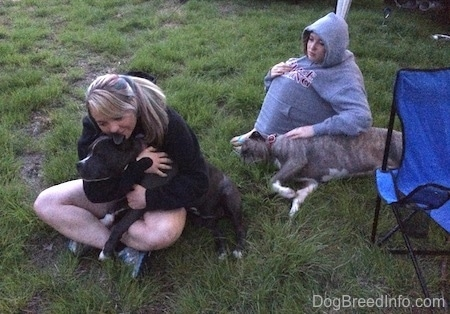 A girl with colorful hair is sitting in grass and she is hugging a blue nose American Bully Pit. Behind her there is a girl covering herself with a grey hoodie petting a blue nose Pit Bull Terrier that is sleeping on its right side.