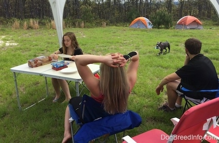 A boy and two girls are sitting at a table and making sandwiches. A blue nose American Bully Pit is walking across a field with an empty bottle in her mouth. There are tents set up in the distance.