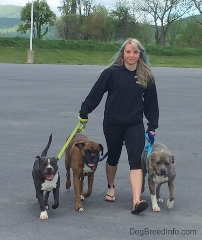 A girl with colorful hair is leading a pack of dogs in a walk across a parking lot.