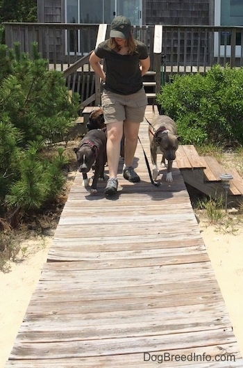 A lady in a green cap is standing in front of the three dogs and is leading them down the wooden walkway.