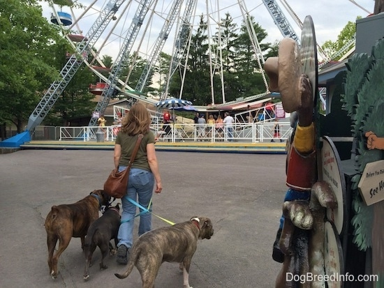 A lady in a green shirt is leading A blue nose American Bully Pit, a brown brindle Boxer and a blue nose Pit Bull Terrier towards a ferris wheel.