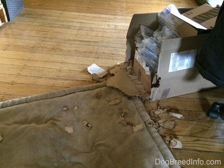 A chewed up cardboard box on a hardwood floor.