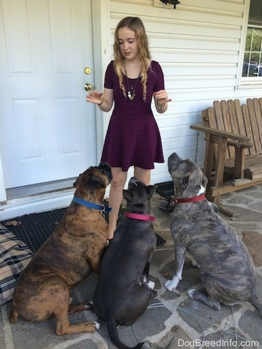 Three dogs are sitting in front of a girl in a purple dress.