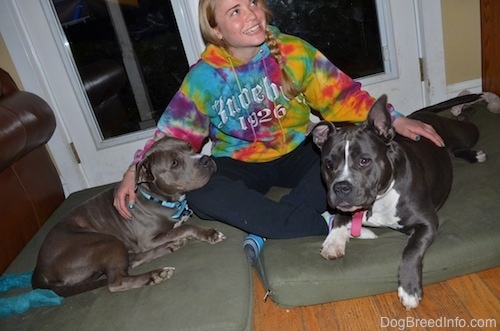 A girl in a tie dye hoodie is sitting on a green orthopedic dog bed pillow in-between an American Pit Bull Terrier and a blue nose American Bully Pit dog.