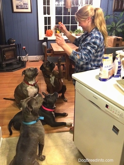 A blonde haired lady is holding up treats in her hands for the four dogs that are in front of her. Three dogs are sitting and one is laying down.