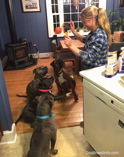 A blonde haired lady is holding snacks in one hand and her other hand is up to command the dogs to sit. There are four dogs sitting in front of her.