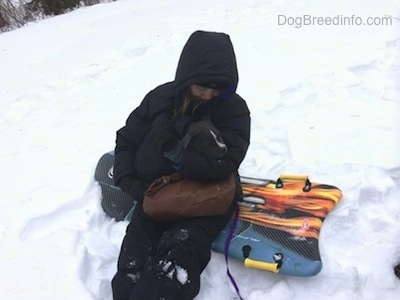 A person in a black coat is sitting on a sled in snow and in their lap is a sleeping American Bully Pit puppy.
