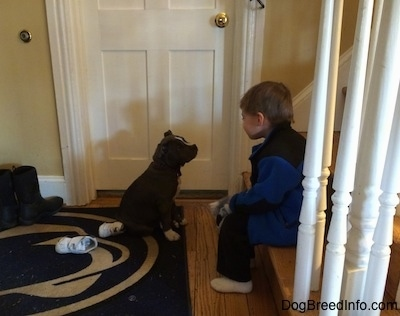A blue nose American Bully Pit is sitting on a Penn State University door mat in front of a boy who is sitting at the bottom of a staircase. They are looking at one another.