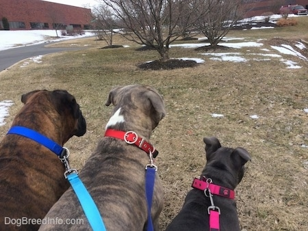 The backside of two dogs and a puppy that are standing and sitting in grass with patches of snow in an industrial park.