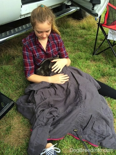 A girl in a maroon and blue plaid shirt is sitting in grass and a blue nose American Bully Pit is laying in between her legs covered in the girls gray coat.
