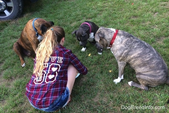 A girl in a plaid shirt is kneeling next to three dogs who are sitting in a circle in grass looking down at treats.