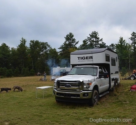 A Tiger Adventure Vehicle RV camper is parked in a field. Two Dogs are digging around in dirt. In the background there is a person starting a fire.