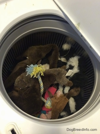 A pile of dog toys are in a washer.