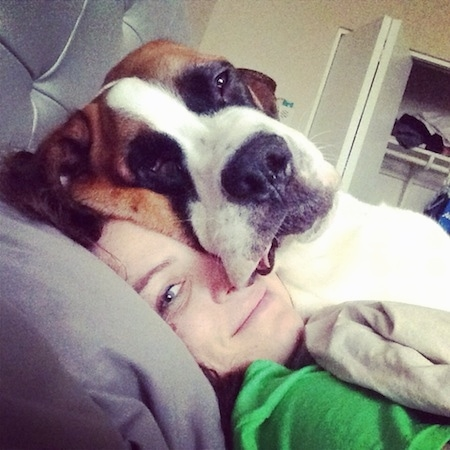 A person is laying on a bed and on top of the person is a laying brown with white and black Saint Bernard. They both are looking forward. The dog's head is laying on top of the lady's head and the dog's head looks bigger.