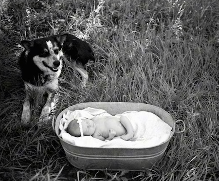 A black and white photo of a baby laying in a blanket filled metal tub. To the left of it laying in a field is a Texas Heeler with its mouth slightly open.