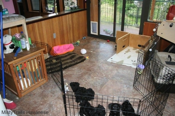 Six puppies are inside of fenced area of a room. There is a potty area and a separate play area in it.