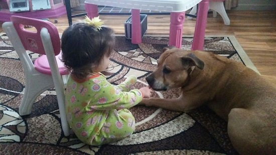 Brynx the American Staffordshire Terrier laying on a rug next to a toddler