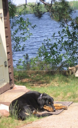 Abbee the Beauceron sitting in front of a front door with a body of water in the background