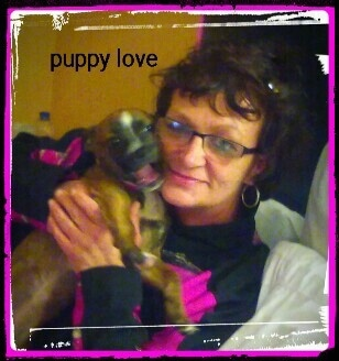 The right side of a brown with white and black Boston Huahua puppy is being held next to a ladies face. Overlaid on the image are the words 'puppy love'.