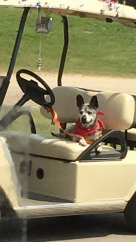 The front right side of a Bo-Dach that is laying across the seat of a golf cart