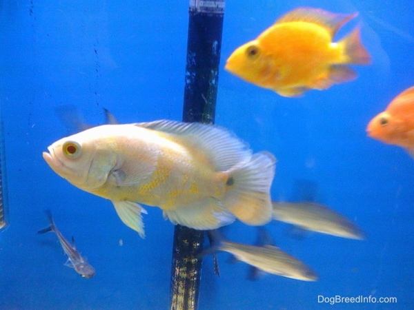 List of freshwater aquarium fish for Healthiest fish list