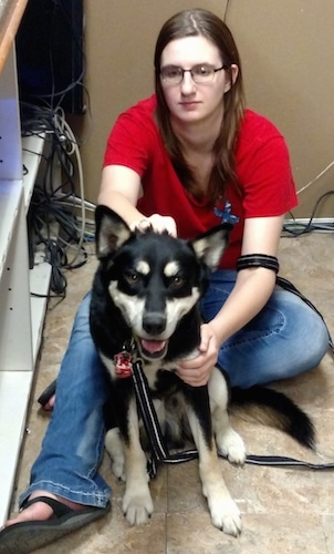A black with tan and white Gerberian Shepsky is sitting in front of a person in a red shirt who is petting the dog next to a cabinet with a lot of wires coming out