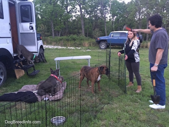 A blonde haired girl and a man holding a shovel has a hammer in his hand has he works on placing a pen around a camper. Coming out of the camper is an American Pit Bull Terrier. There are three dogs sitting, laying and standing in grass right in front of the camper.