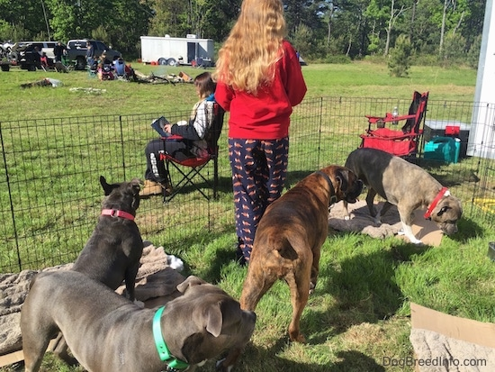 A blonde haired girl is standing inside of a pen with four dogs. In the background there are other people begining to setup there campsites.
