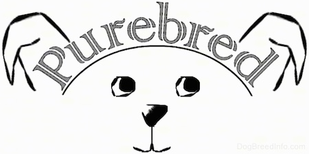 A drawn picture of a dog with the word Purebred over its head.